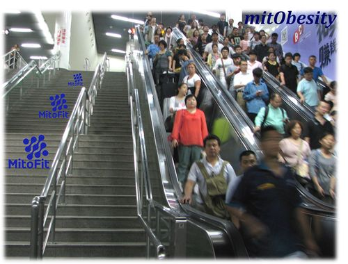 MitObesity-escalator.jpg