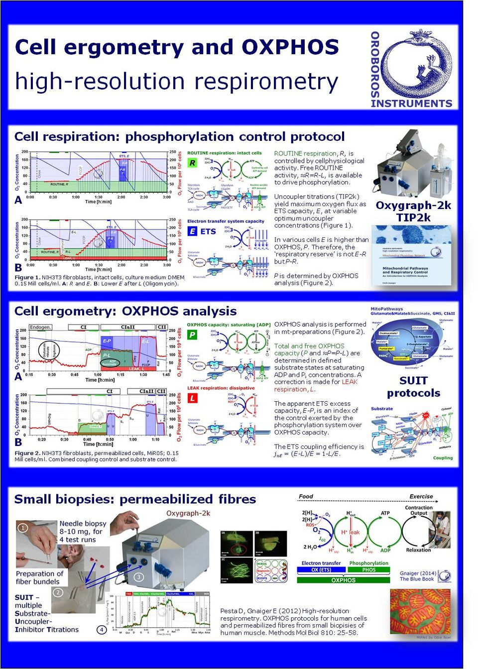 Cell ergometry.pdf