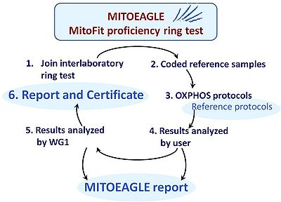 MitoEAGLE Proficiency ring test